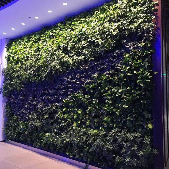bespoke artificial green wall for shop display Gallery Image