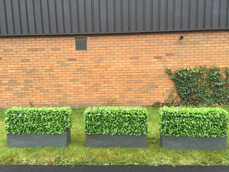 Maintenance free instant hedge planters for shows and events Gallery Image