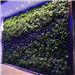 bespoke artificial green wall for shop display Gallery Thumbnail