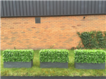 Maintenance free instant hedge planters for shows and events Gallery Thumbnail
