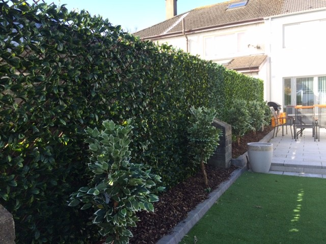 Greenfx Trellis hedge screening, easy to install. Gallery Image