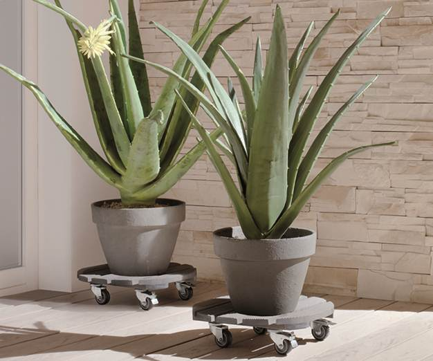 Plant Pot Trollies by Wagner.