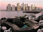 ECOncrete Tide Pools New York  Gallery Thumbnail
